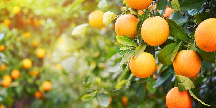 pregnancy-fruits-3